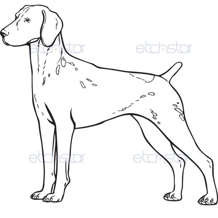 germshpointer2